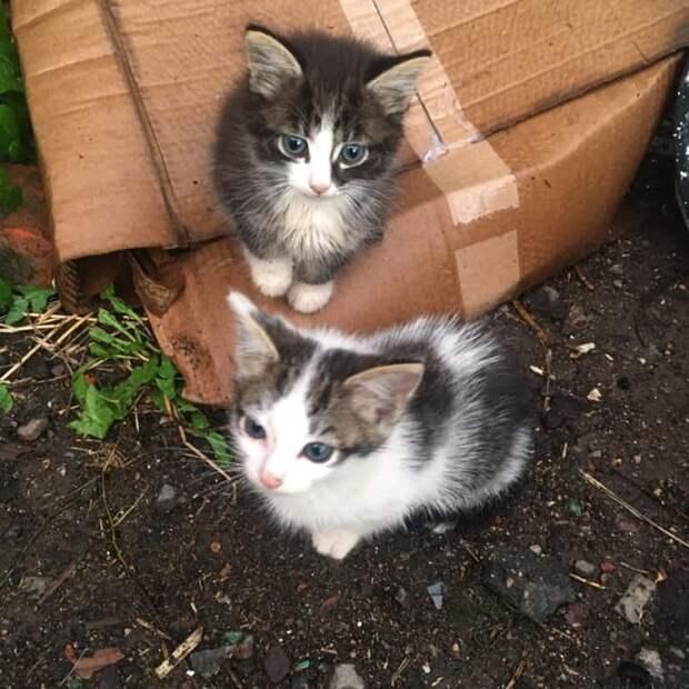 В Хорошёво-Мнёвниках ищут новый дом котятам Симба и Бимбо