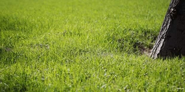 На газоне у МЦК «Коптево» взойдет свежая трава