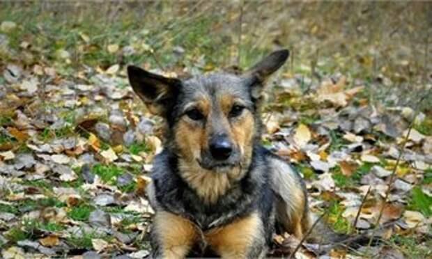 49-летний беспредельщик из Кильмези убил собаку на глазах её хозяина