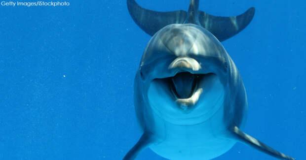 «Начал тянуть на дно», - Ирена Понарошку рассказала о домогательствах со стороны дельфина