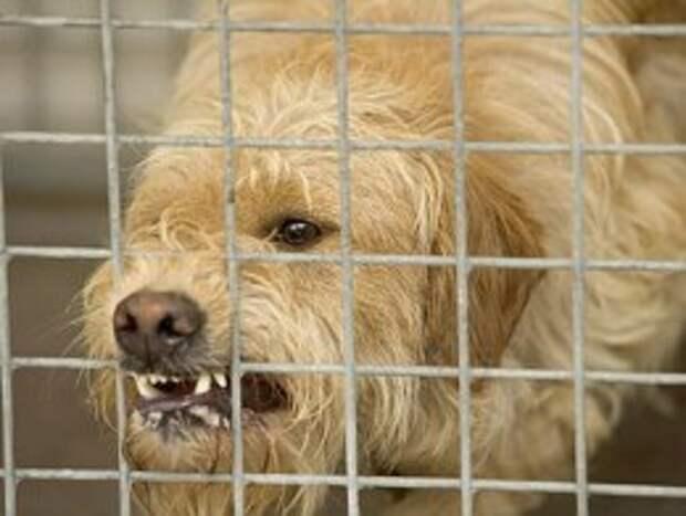 4 мифа про бешенство: животное может вести себя нормально – но быть заразным.