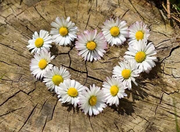 Опрос: 26% жителей Рязани избежали болезненной любви