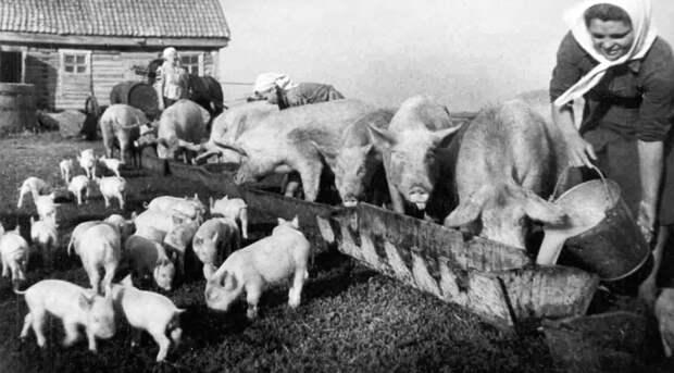 Семь историй о колхозном счастье