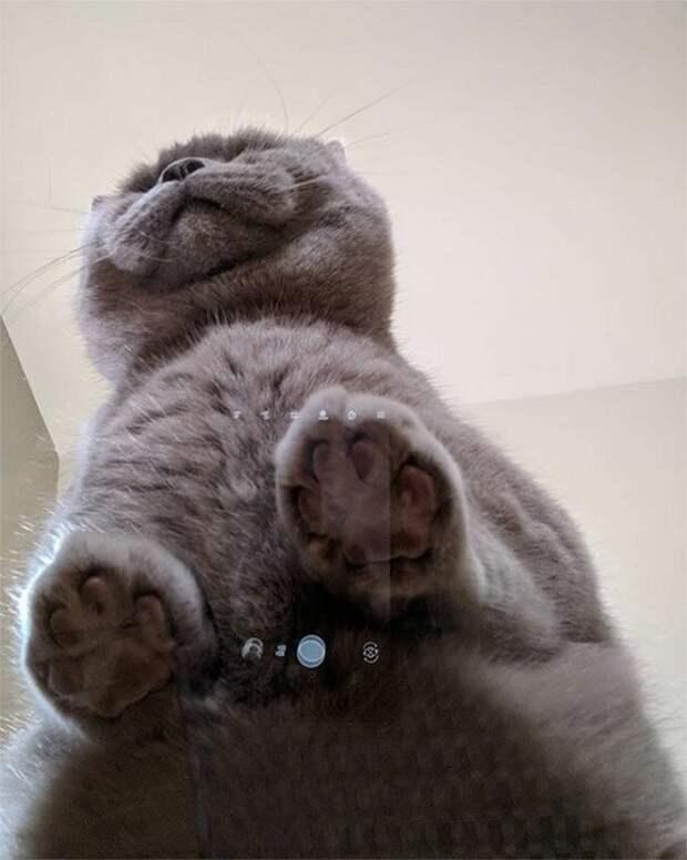 Я и котик довольны котики, коты, милота, мотики, сквозь стекло