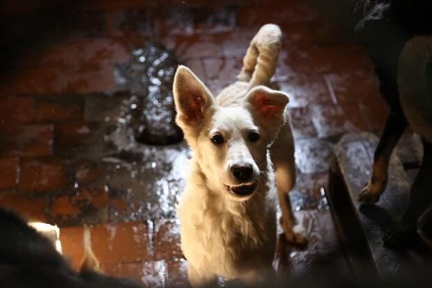 Отловщики бродячих собак приступили к работе в городе Обь
