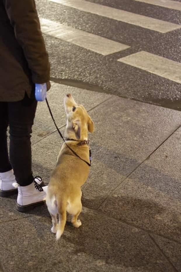 Жена, которую любили меньше, чем собаку