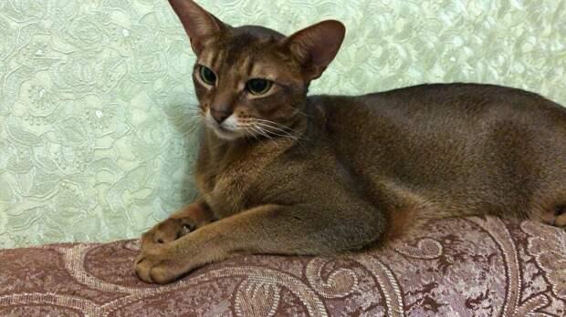 Не любил кот Барсик, когда к хозяйке приходят в гости внуки