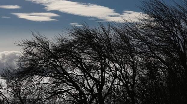 Синоптики предупредили об усилении ветра до 20 м/с в Тюменской области