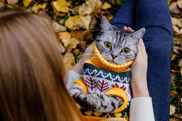 Выкинуть всегда успеете, или Что можно сделать из старого свитера