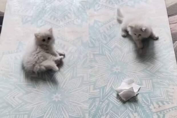 Начинающий охотник: маленький котёнок напал на салфетку и умилил интернет