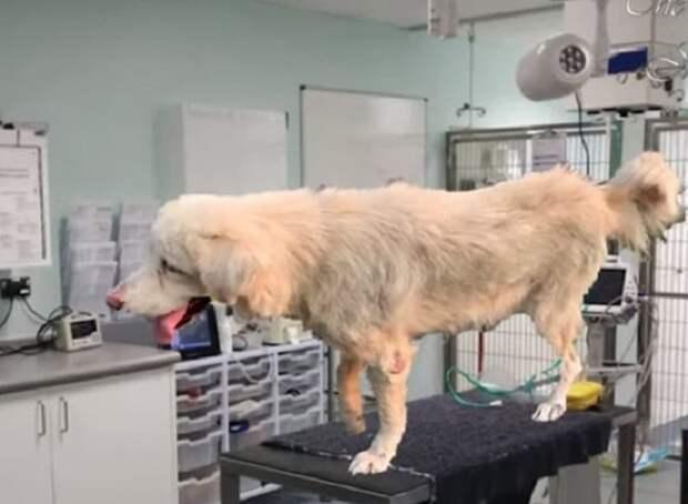 Пес в больнице
