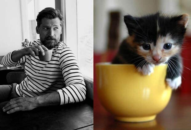 20 забавных коллажей, на которых наглядно видно, что у котов и красивых мужчин есть что-то общее