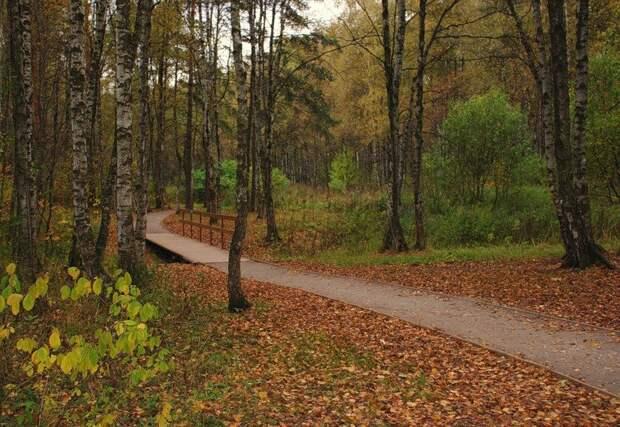 Алешкинский лес. Фото: открытые источники