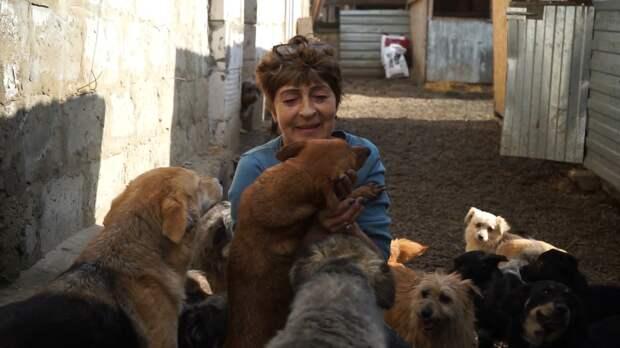 Зоозащитница приютила на своем участке более 700 бездомных собак. ФАН-ТВ