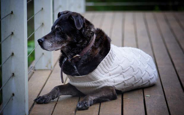 Не позволяйте собаке мерзнуть: переместите ее подстилку поближе к обогревателю или потеснитесь на кровати, а для улицы купите теплую одежду. Фото Terri Sharp/Pixabay