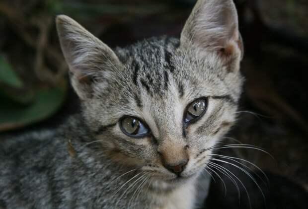 Котёнок стучал в закрытую дверь, за которой была тишина