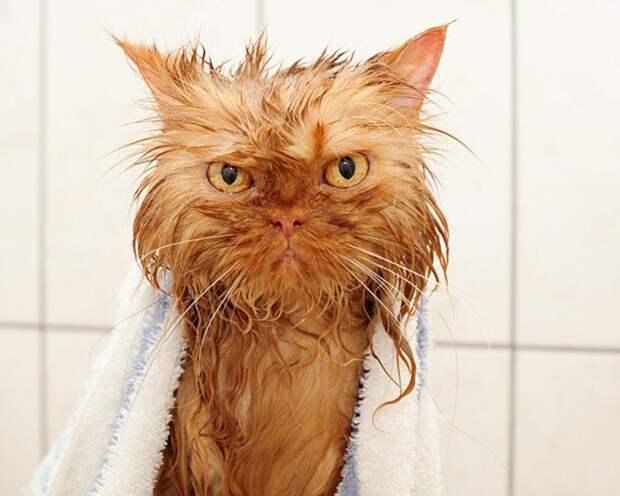 22 мокрых кота