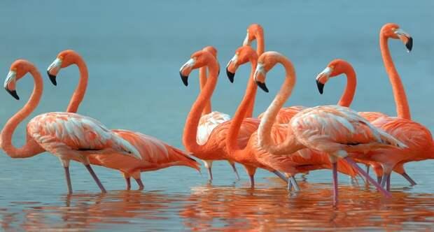 Thumb flamingo land testimonial large image