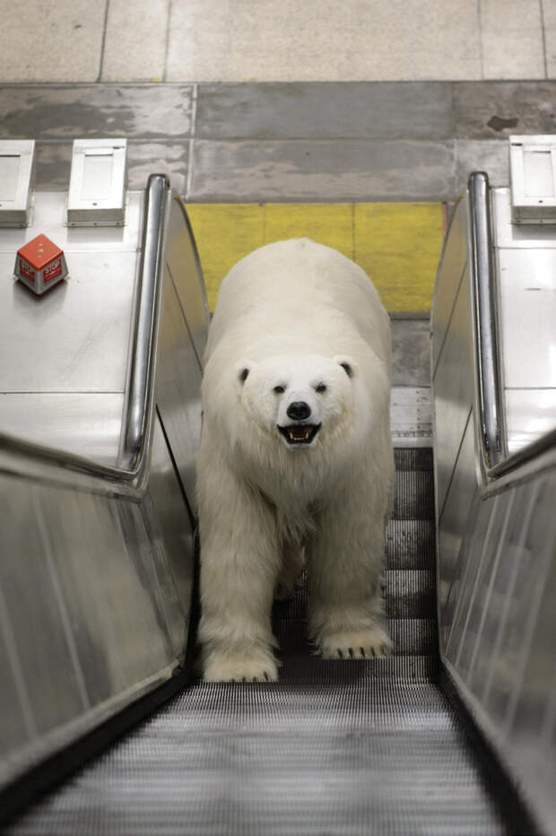 0077 По улицам медведя водили