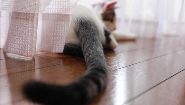 Хвост кота