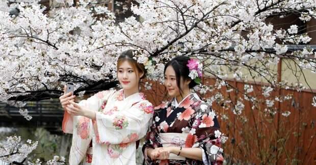 Как цветущая сакура стала для японцев сакральным деревом