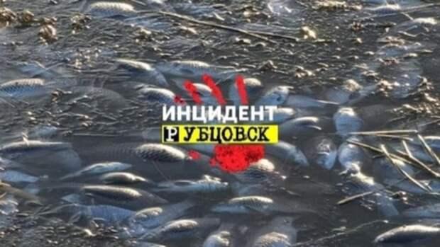 Минприроды выяснит причину гибели рыбы на озере под Рубцовском