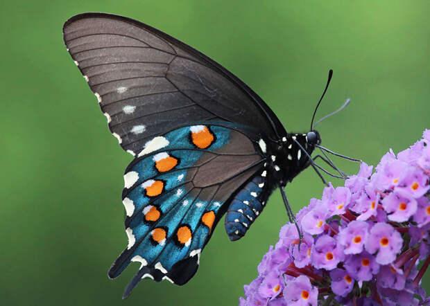 caterpillar-moth-butterfly-before-after-metamorphosis-14-2