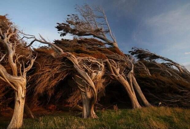 Ратовый лес в Новой Зеландии