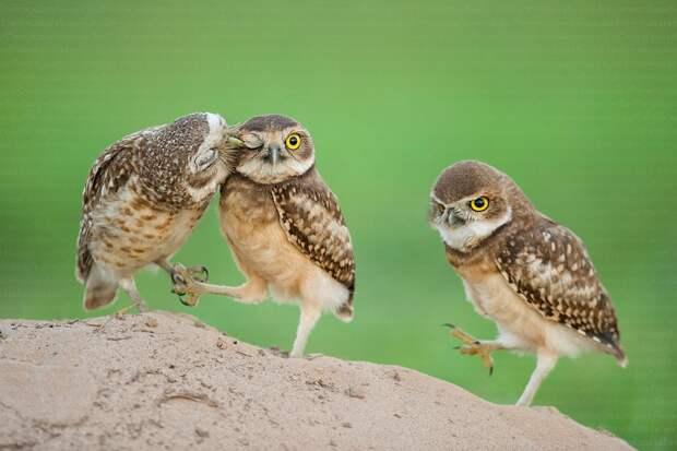 Возможно, это изображение (птица и природа)