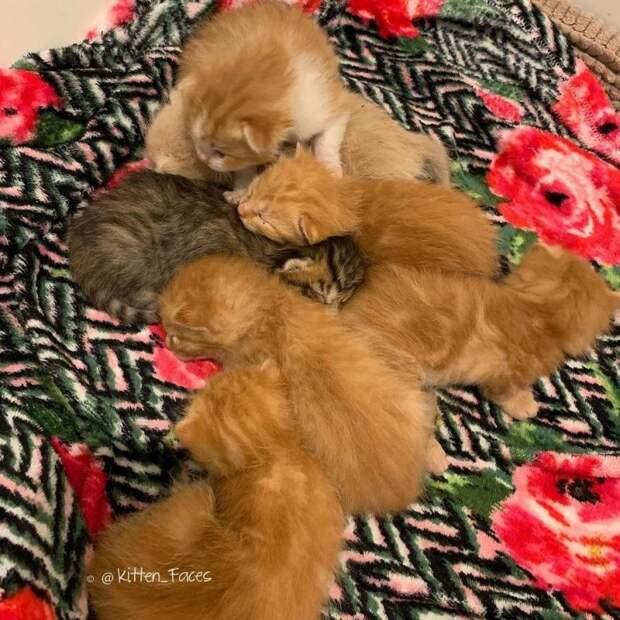 Кошка с трудной судьбой приняла пушистых сироток, как своих история, история спасения, коты, котята, кошки, помощь животным, спасение животных