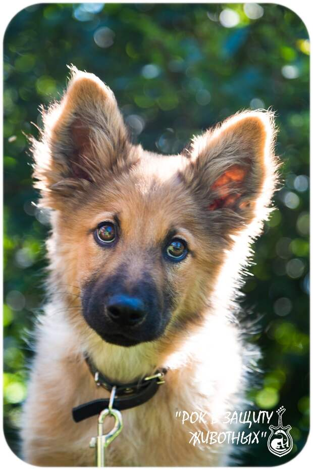 щенок на фото