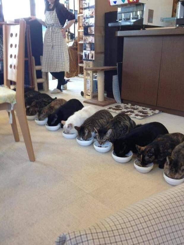 Кормление котов в ряд