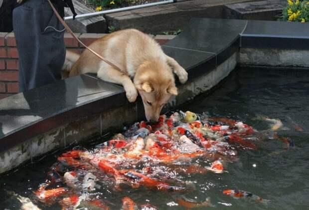 Решила поздороваться с рыбками животные, смех, снимок