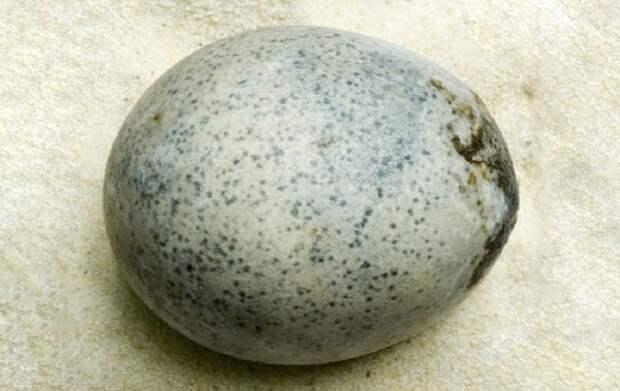 Археологи случайно активировали самые старые в мире «зловонные бомбы»