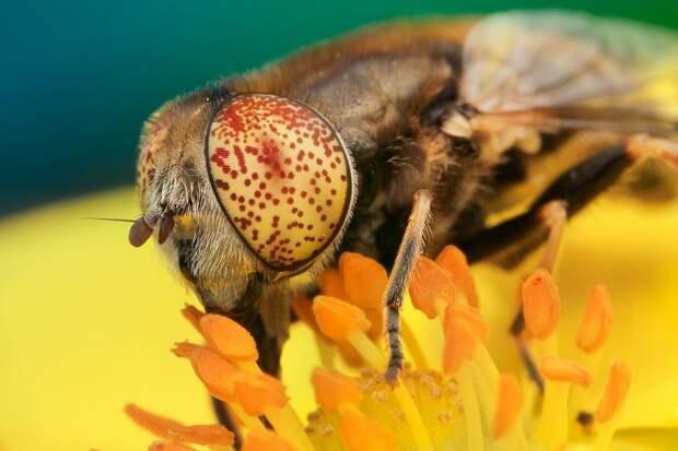 insects11 Портреты насекомых