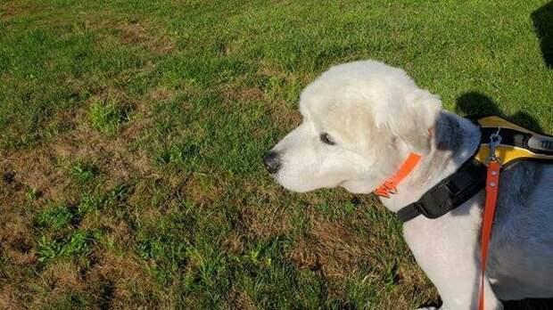 Старый и больше никому не нужен: пса бросили, оставив записку