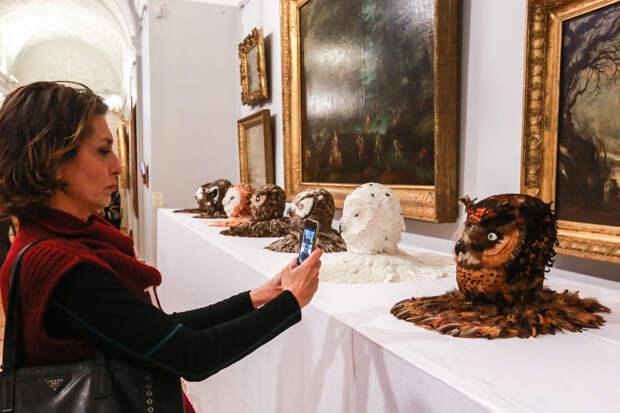 Вот ветка, вот дохлая собака: Что покупают и выставляют государственные музеи под видом современного искусства