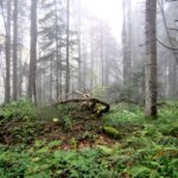Состояние лесов хребта Азиш-Тау оказалось неблагополучным