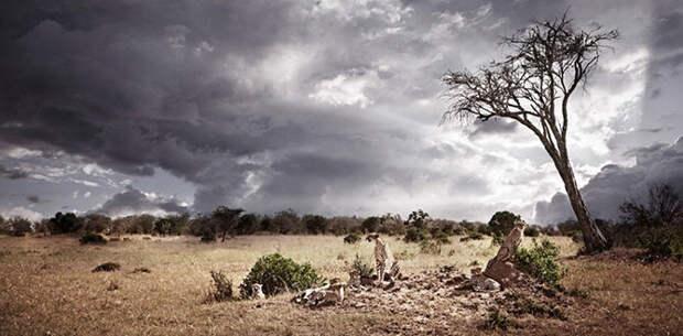Гордость Африки