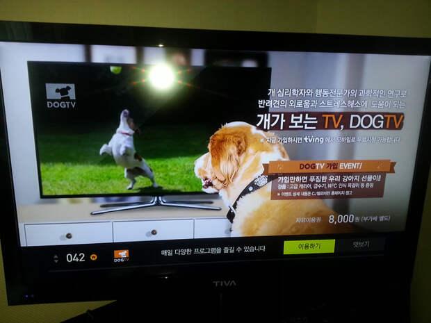 Канал для собак