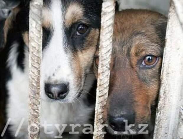 В Шымкенте в этом году произошло 6 случаев жестокого обращения с животными