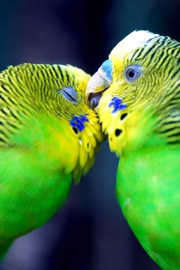Летние птицы
