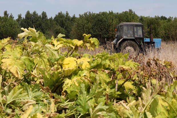 Петербуржец заплатит более 35 млн за сорняки на даче
