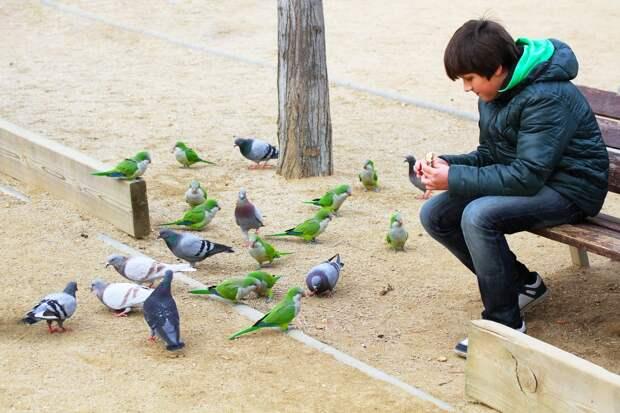 10 мест, где привычных для нас голубей заменяют экзотические животные
