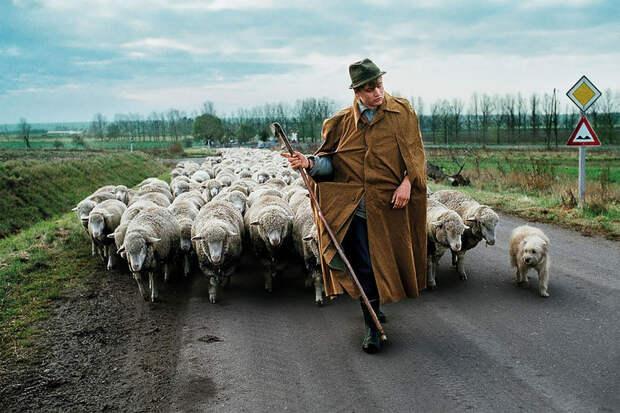 Фотограф демонстрирует поразительную связь между людьми и животными по всему миру