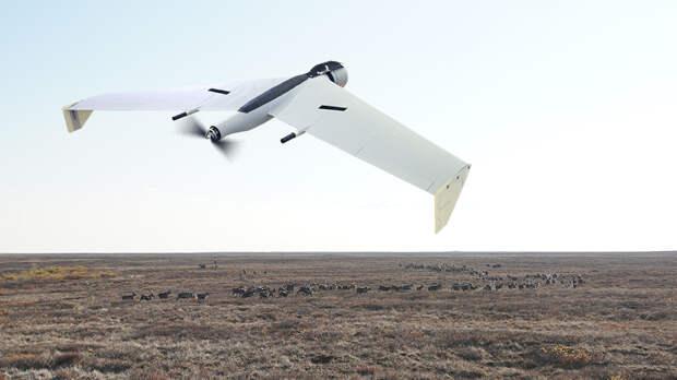 Всемирный фонд дикой природы планирует использовать беспилотник «Калашникова»