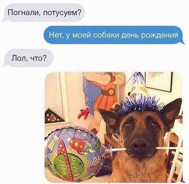 А вы отмечаете день рождения собаки? животные, картинки, прикол, собаки, собачники, фото, юмор