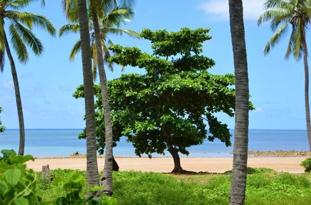 Дерево смерти на пустынном пляже. Это надо знать.