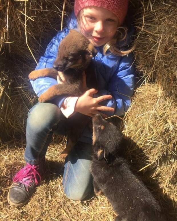 Реанимация для хищника: В Хорошёве-Мневниках возвращают к жизни пострадавших животных