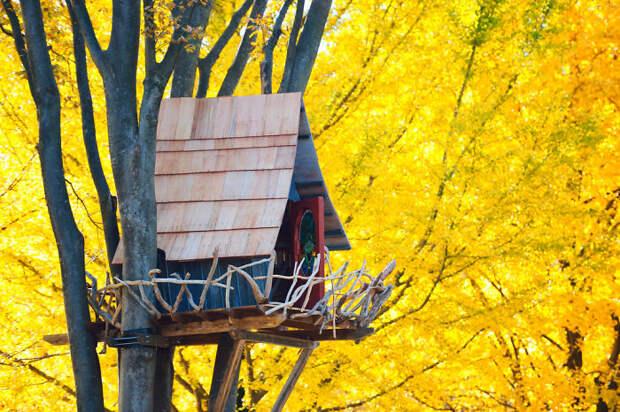 Японский домик на дереве в Токио.